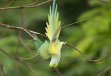 Team discovers three new bird species in africa